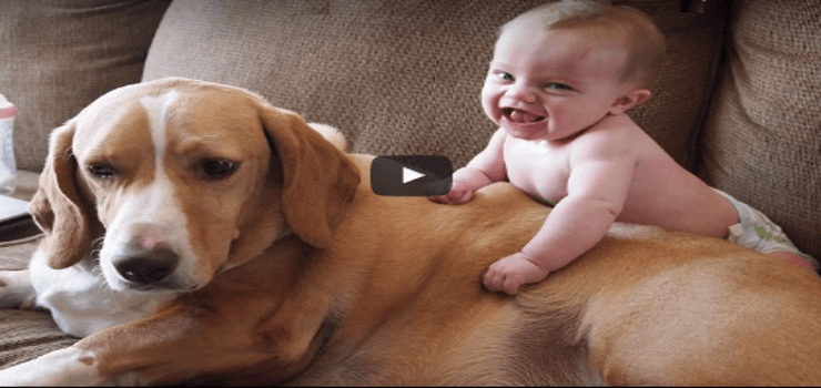 dog-with-baby